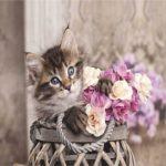 Купон мебельный Cat 33