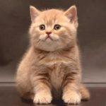 Купон мебельный Cat 53