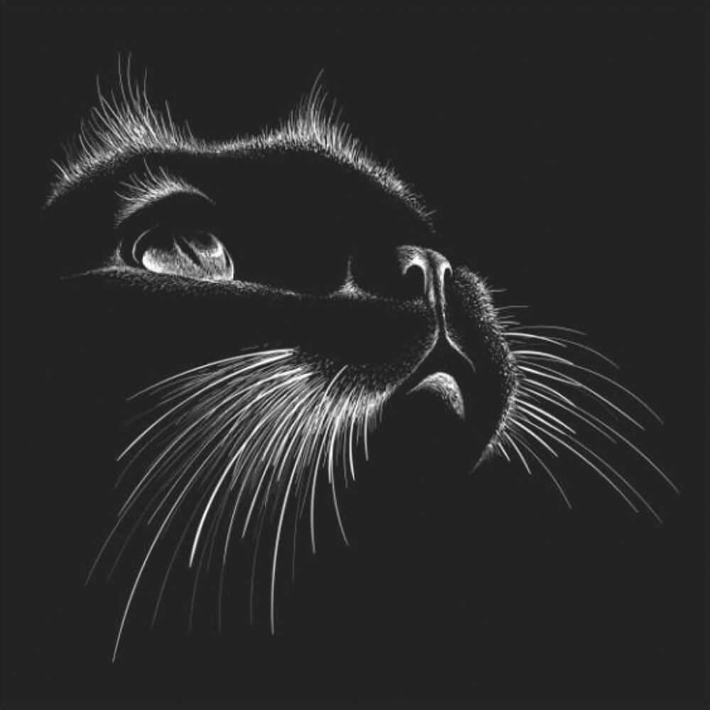 Купон мебельный Cat 88