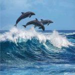 Купон мебельный Dolphin 86