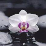 Купон мебельный Orchideya 18