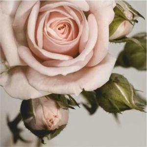Купон мебельный Rose 4